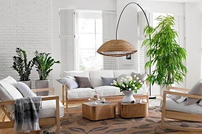 Top 5 loại cây dễ trồng trong nhà
