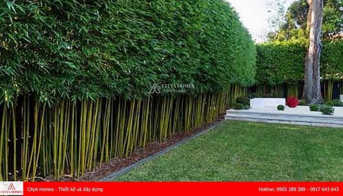 Mẫu hàng rào sử dụng cây lá thiên nhiên - 2
