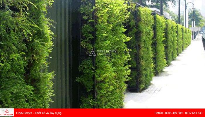 Hàng rào từ cây xanh